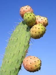 Pâtes de Fruits Figues de Barbarie