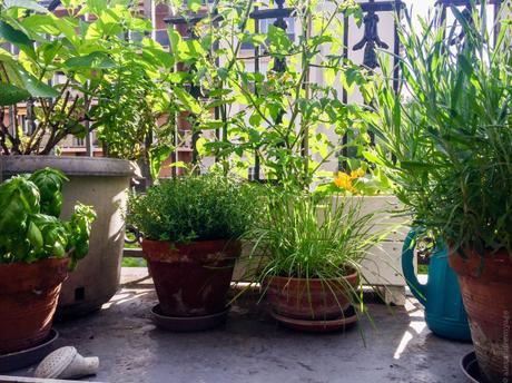 Un petit tour dans le jardin de Lutsubo…