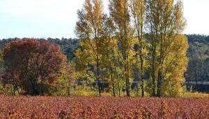 faveur l'automne...