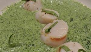 Noix Saint Jacques crème cresson