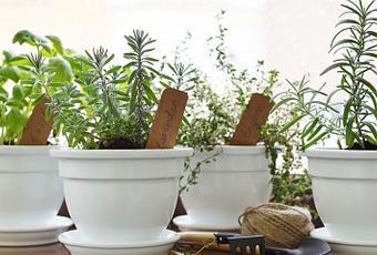 Comment Planter Des Plantes Aromatiques En Pot