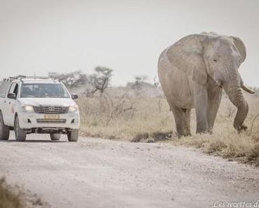 Etosha National Park – Namibie