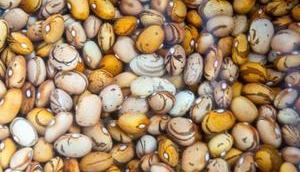 Eloge simplicité Cocotte haricots légumes