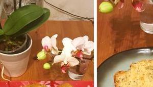 cake citron pavot sans matière grasse